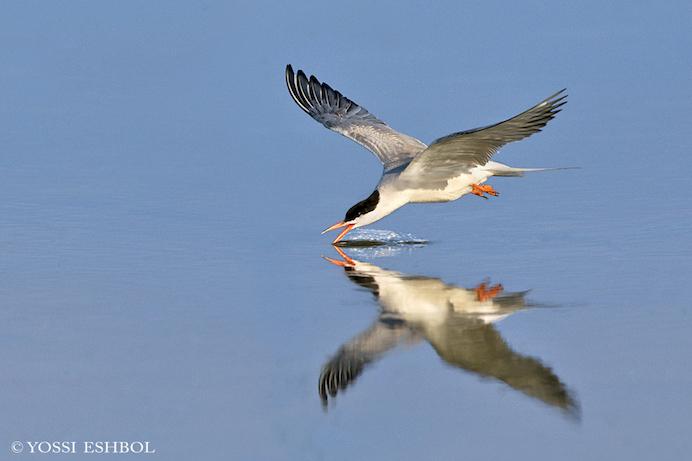 """מהלך נרחב של """"מלח הארץ""""  לשימור אוכלוסיית עופות המים, משיג תוצאות מרשימות"""