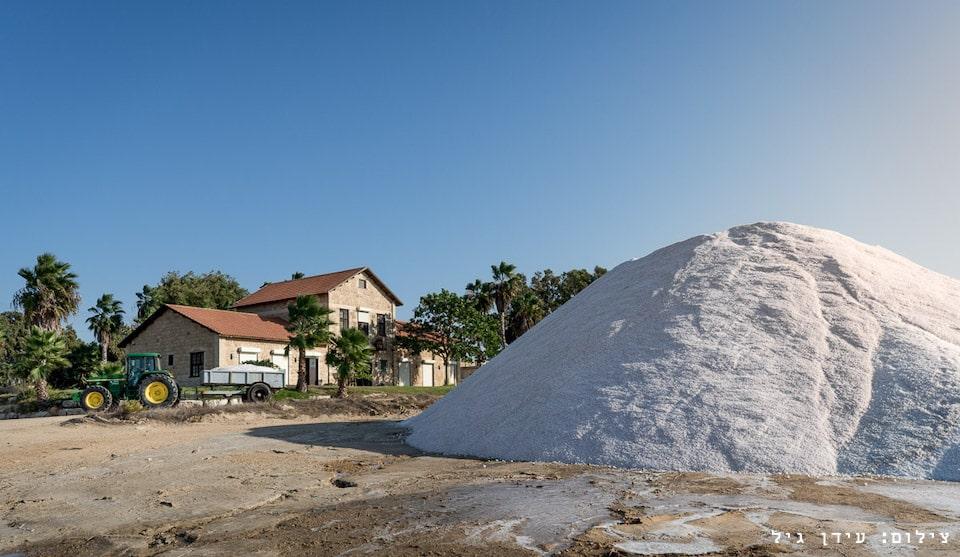 צילום יום קציר המלח בעתלית